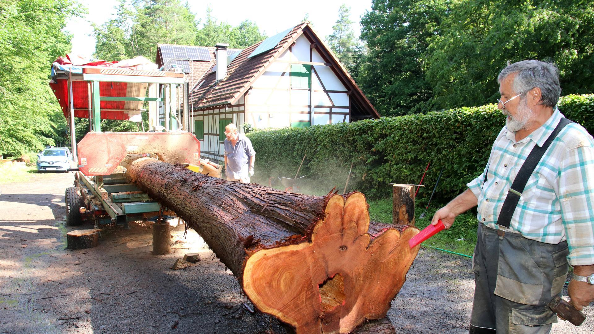 Franz Bulander mit einem 70 Jahre alten Lebensbaum beim Naturfreundehaus Lettenbrunnenhütte im Gebiet Hagenschieß in Pforzheim.